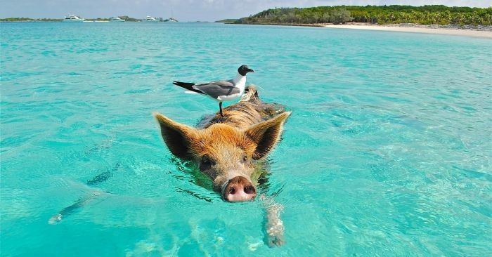 Bahamy zdjęcie
