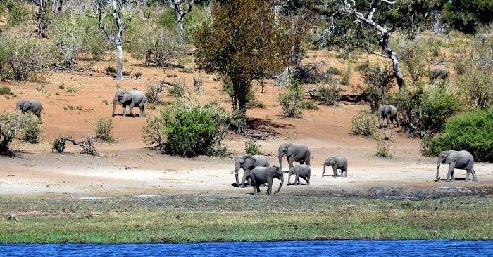 Botswana zdjęcie