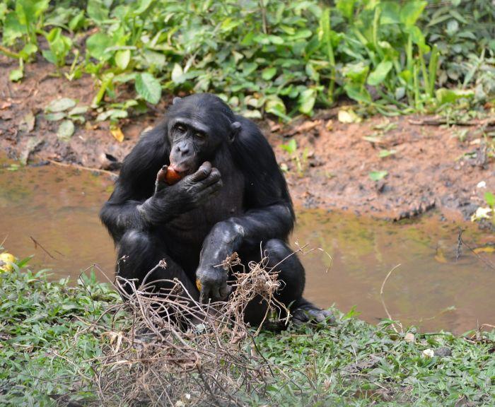 DRK zdjęcie