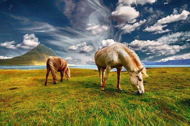 Islandia zdjęcie