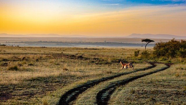 Kenia zdjęcie