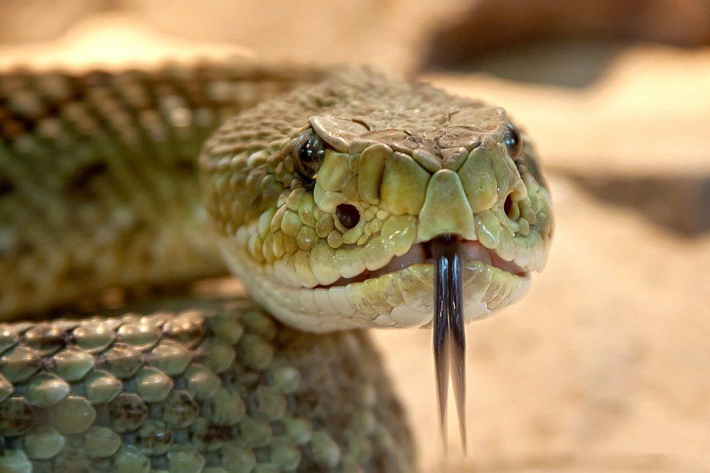 Węże ciekawostki