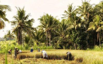 Indonezja ciekawostki – część 4