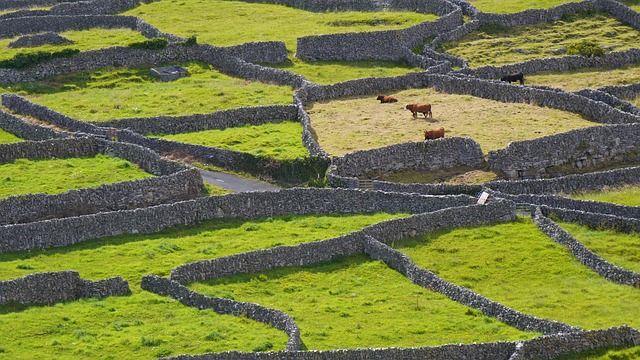Irlandia grafika4