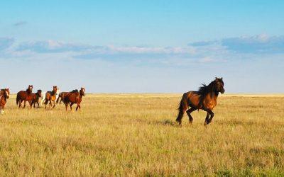 Kazachstan ciekawostki – część 2
