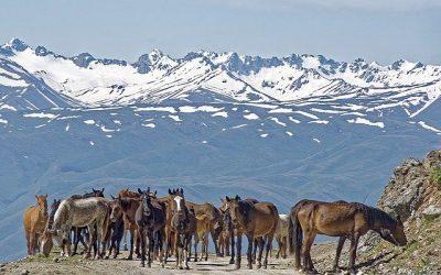 Kirgistan ciekawostki – część 2