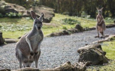 Australia ciekawostki – część 4