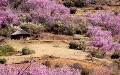 Lesotho ciekawostki – część 2