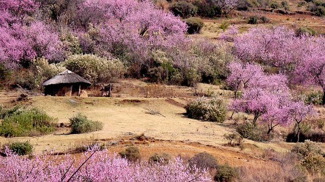 Lesotho grafika2