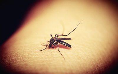 Egzotyczne wakacje – jak zabezpieczyć się przed malarią?