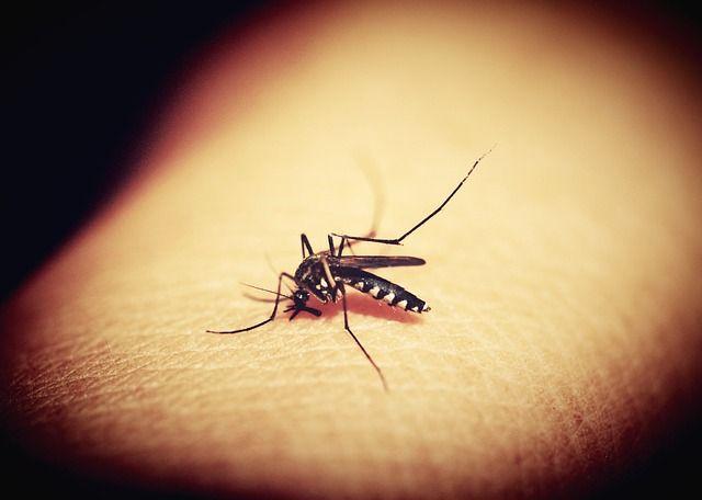 komar malaria grafika1