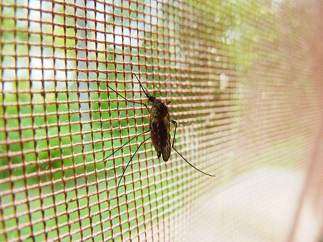 komary zabezpieczenie grafika