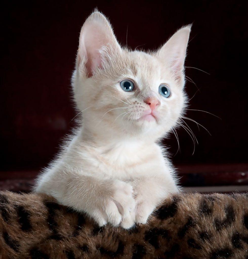 miska dla kotów