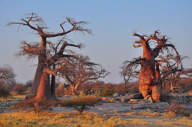 Botswana ciekawostki – część 3
