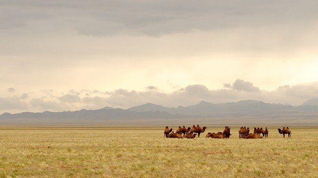 Mongolia grafika3