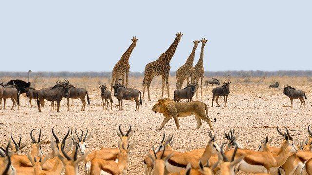 Namibia grafika3