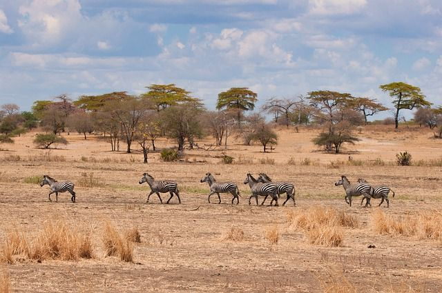 Tanzania grafika2