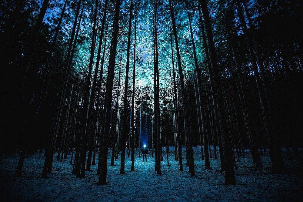 latarka w lesie