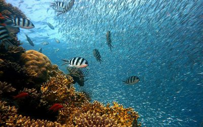 Dron podwodny – poznaj morskie głębiny