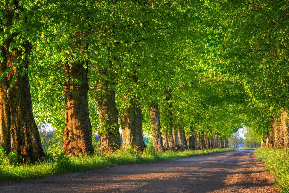 drzewa przy drodze Mazury