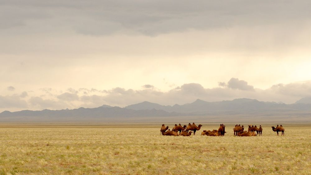 step Mongolii