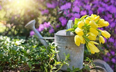 Choroby roślin, które zdarzają się w każdym ogrodzie