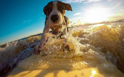 O czym należy pamiętać zabierając psa na wakacje?