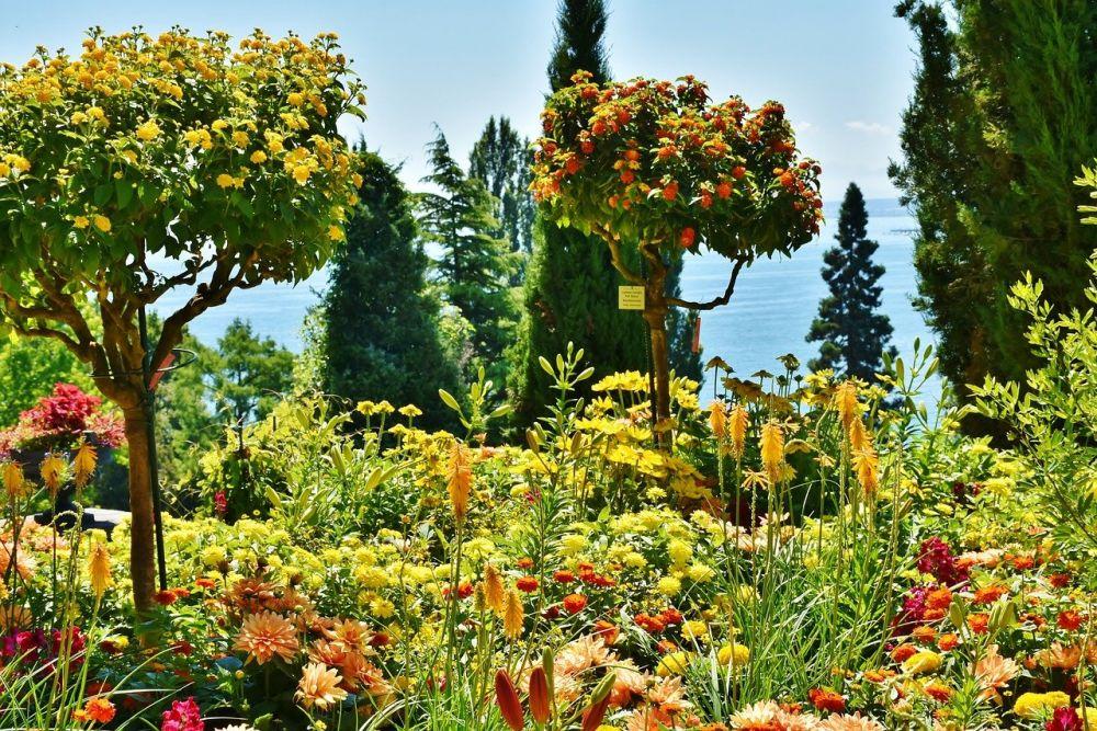Mainau - Wyspa Kwiatów grafika