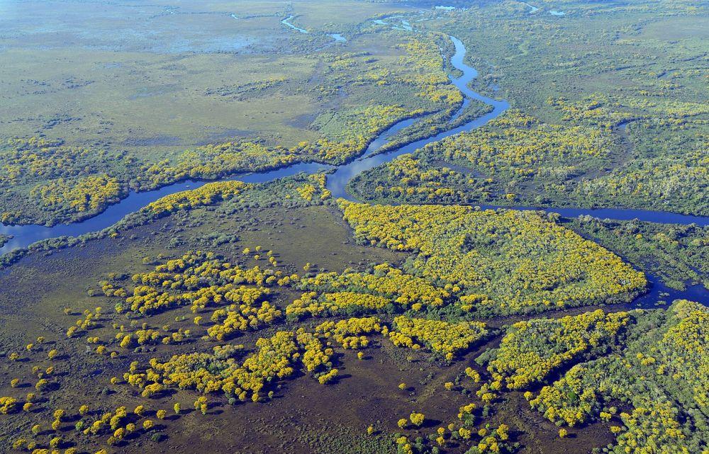 Pantanal grafika